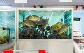 Live fish ready for sale in the hypermarket — Stock Photo