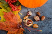 Autumn maple leaves with pumpkin and chestnuts — Stock Photo