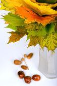 Autumn maple leaves in vase — Stock Photo