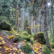 Beautiful dense forest — Stockfoto #55901693