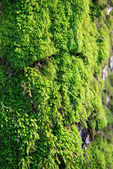 Moss growing on tree in forest — Stock Photo