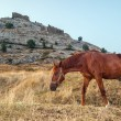 The horse on the background tower of Genoa fortress in Sudak Cri — Stock Photo #69823919