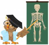 Owl teacher. Anatomy Lesson, the study of the human skeleton — Stock Vector