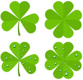 Set clover leaves isolated on white background — Stock Vector