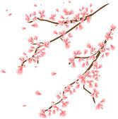 Branch with sakura flowers — Stock Vector