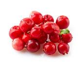 Cowberries macro — Stock Photo