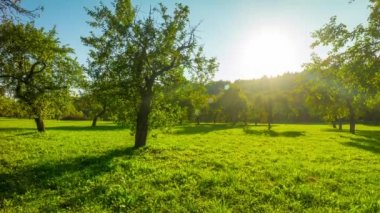 Apple orchard in the fall, panoramic time-lapse — Stockvideo