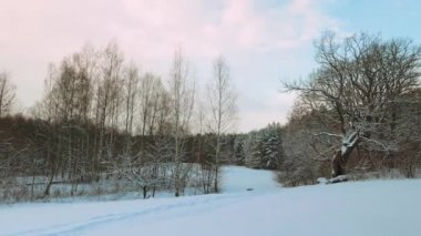 Winter forest, panorama — Stock Video