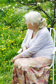 The grandmother in  garden under a blossoming apple-tree — Stock Photo