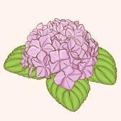 Flores de hortênsia rosa — Vetor de Stock