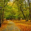 Autumn alley — Stock Photo #55625311