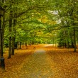 Autumn alley — Stock Photo #55625333