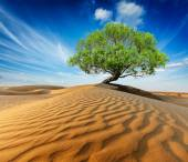 Lonely green tree in desert dunes — Stock Photo