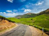 Green tea plantations in Munnar, Kerala, India — Stock Photo