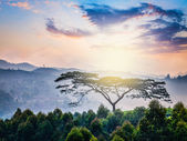 Lonely tree on sunrise in hills — Foto Stock