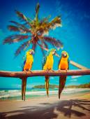 Parrots Blue-and-Yellow Macaw on beach — Stock Photo