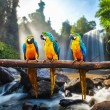 Blue-and-Yellow Macaw Ara ararauna — Stock Photo #58956577