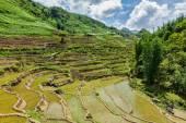 Rice field terraces. Near Sapa, Vietnam — Stock Photo