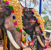 Decorated elephants in Hindu temple at festival — Stock Photo