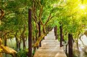 Wooden bridge in flooded rain forest jungle of mangrove trees — Stock Photo
