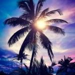 Palm on sunset — Stock Photo #67990083