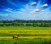 Spring summer green scenery lanscape with horse — Stock Photo