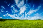 Spring summer green field scenery lanscape — Stock Photo