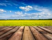 Yellow canola field with sky, wooden planks floor — Stock Photo