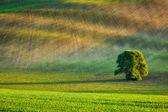 Einsamer Baum kontrollieren-Felder — Stockfoto
