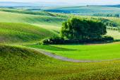 Moravian rolling landscape with trees — Stock Photo
