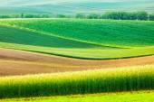 Moravian rolling landscape — Stock Photo