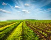 Rolling fields of Moravia — Stock Photo