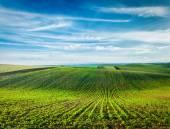 Rolling fields of Moravia — Stockfoto