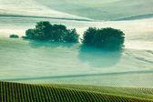 Mährische wogende Felder Morgen Nebel — Stockfoto