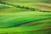 Rolling landscape of  South Moravia — Stock Photo