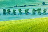 Moravian rolling landscape with trees in morning — Stock Photo