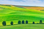 Rolling landscape of South Moravia with trees. — Stock Photo
