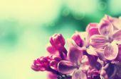 Lila blommor bakgrund — Stockfoto