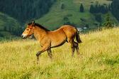 Funny foal — Stock Photo