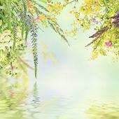 Doğal çiçek arka plan — Stok fotoğraf