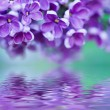 Lilac flowers background — Stock Photo #52660401