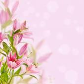 Fundo de lírios rosa — Foto Stock