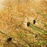 dziki rumianek kwiaty — Zdjęcie stockowe #52724831
