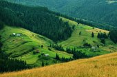 Carpathian mountain landscape with tree — Stock Photo