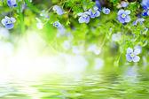 Niezapominajka kwiaty — Zdjęcie stockowe
