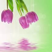 Fond de fleurs de tulipe — Photo