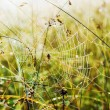 Large spider in the web — Stock Photo #53362289
