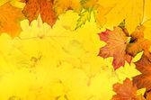 Herbst blätter rahmen — Stockfoto