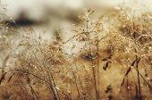 Morning beauty — Stock Photo