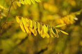 Autumn tree branch — Stockfoto